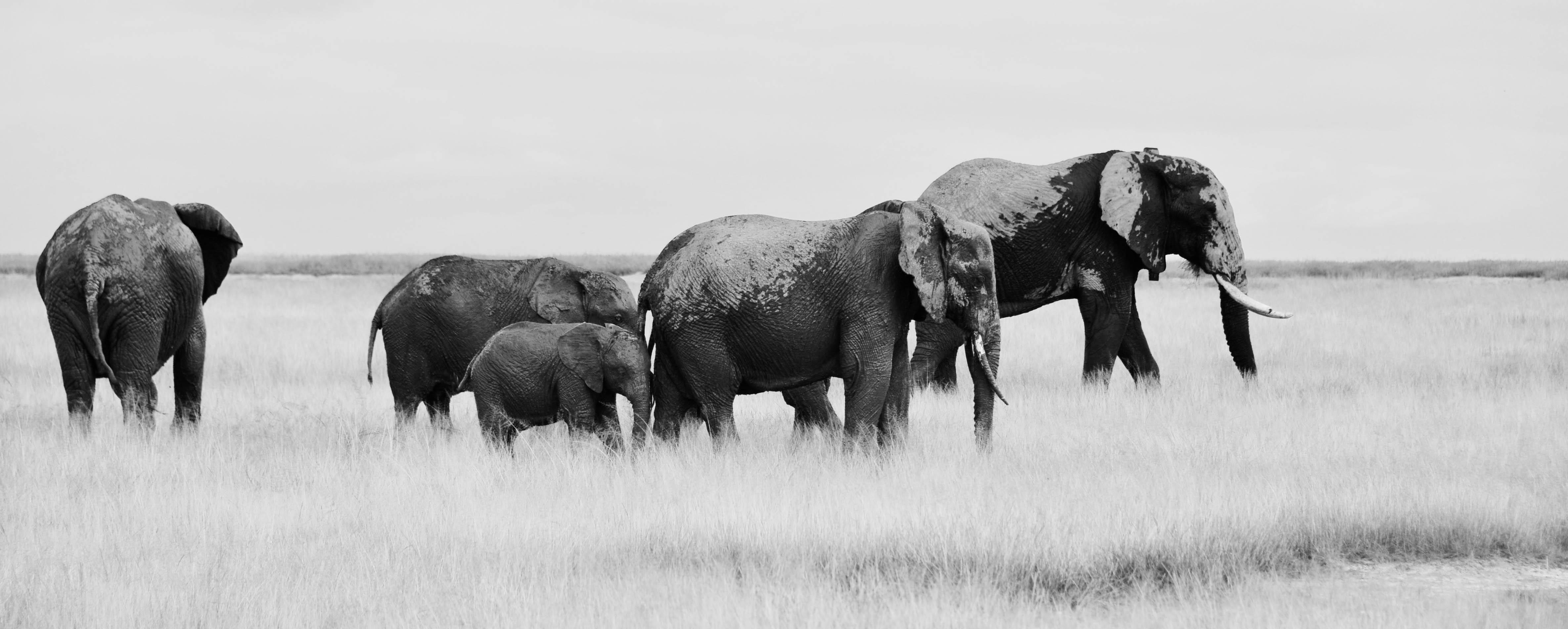 banniere éléphants
